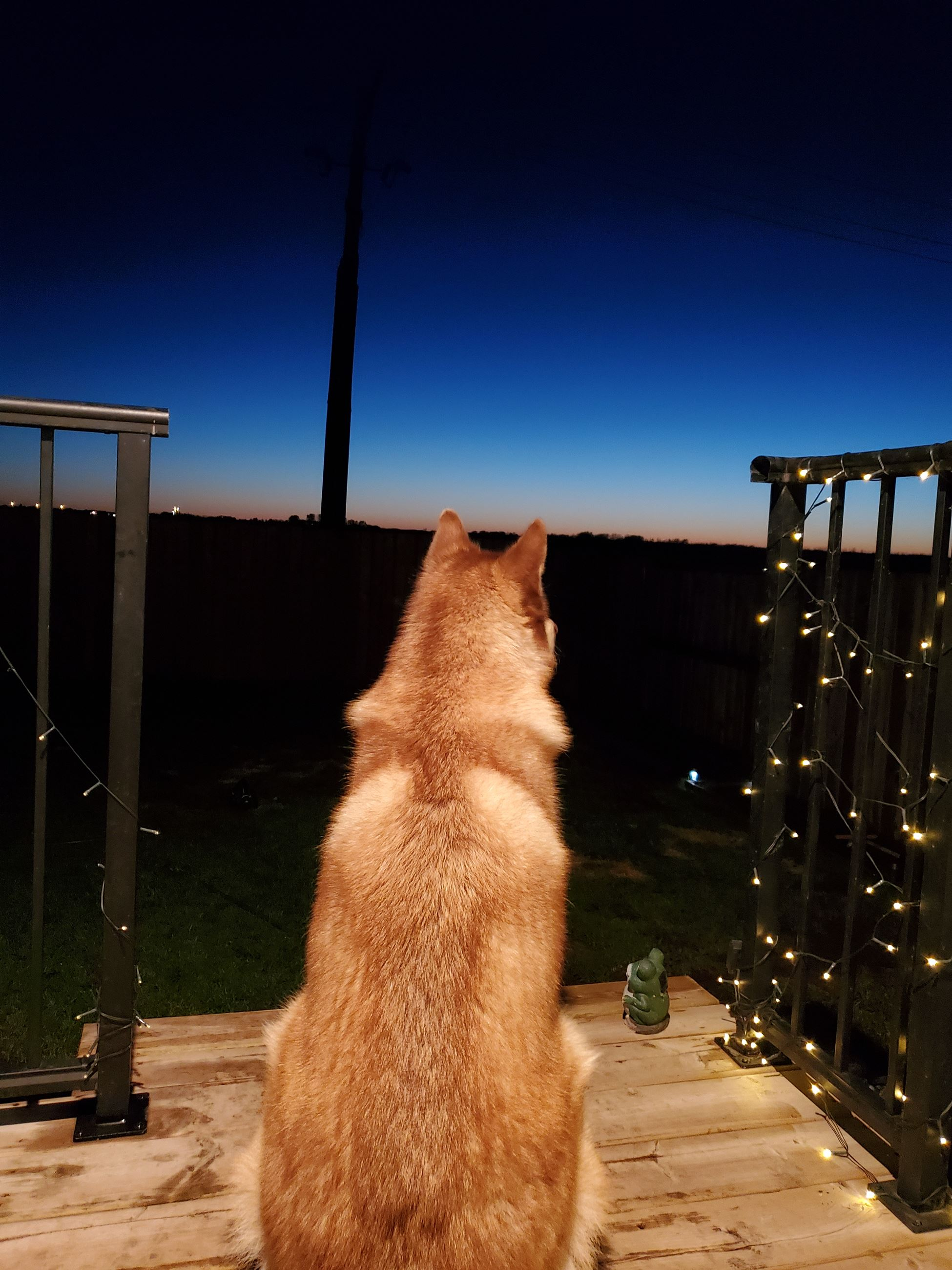 puppy watching the sunset